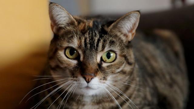 5 signes qui montrent qu'un chat s'ennuie