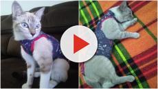 Gatas são trocadas em clínica veterinária e entregues a donos errados