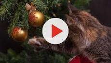 Pourquoi les chats sont attirés par le sapin de Noël