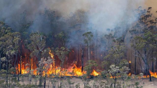 Australia, gli incendi avrebbero distrutto circa 500 milioni di animali