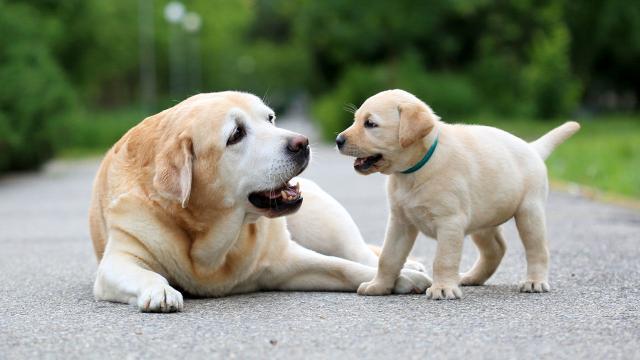 Cães podem ter pressentimentos