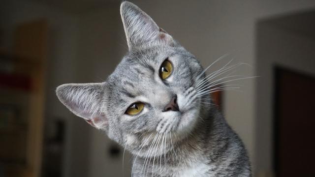 5 astuces imparables pour faire rentrer votre chat à la maison