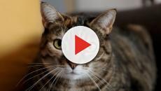 Selon un expert, les chats ne nous 'comprennent' pas aussi bien que les chiens