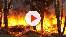 Cientistas dizem que aquecimento global podem provocar maiores incêndios florestais
