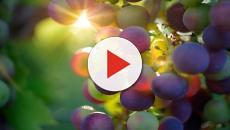 5 libros para principiantes del mundo del vino
