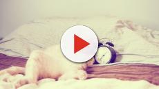 Quand un chat vous réveille toujours à la même heure, c'est parce qu'il a faim
