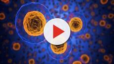 Los biopolímeros pueden llegar a genera una cadena de reacciones inflamatorias