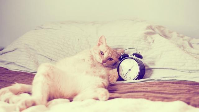 Si le chat vous réveille à la même heure, c'est en partie