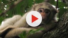 Sul e Sudeste voltam a ter mortes de macacos com febre amarela, diz ministério