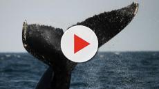 The Whale, il primo museo in Norvegia dove poter osservare le balene in libertà