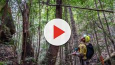 Australia: i marsupiali vombati salvano gli altri animali scavando buche anche per loro