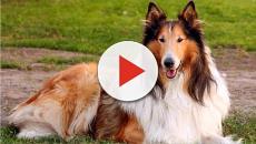 Erik, il cane che ha vagato per giorni in cerca del suo padrone