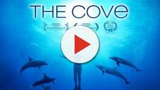 The Cove, il premio Oscar mostra il massacro dei delfini in Giappone