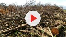 Polícia Ambiental descobre desmatamento no Paraná