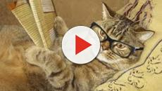 Ce qu'il faut faire pour ne plus être réveillé par son chat