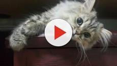 Le chat protégerait les maisons des mauvais esprits