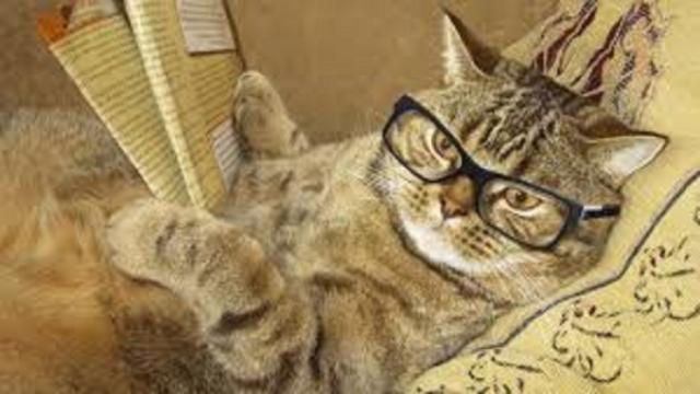 Les raisons pour lesquelles un chat dort avec vous