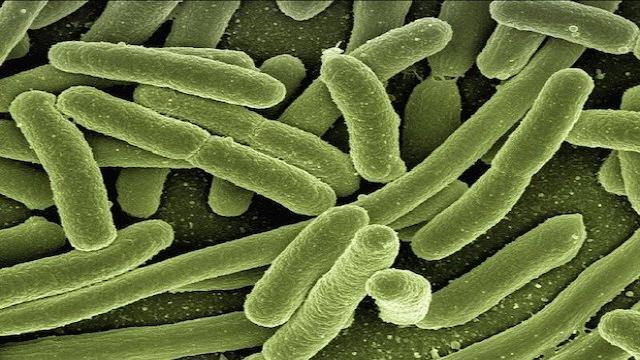 La OMS sostiene que el origen del coronavirus parece ser animal