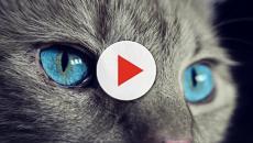 7 Animais e o significado deles nos sonhos