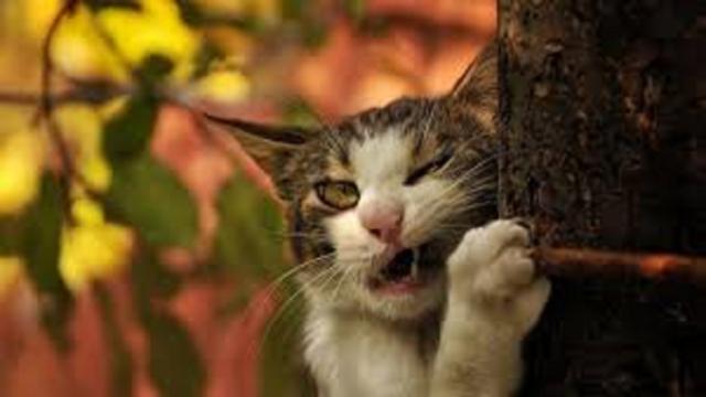 Le chat pourrait manger son maître