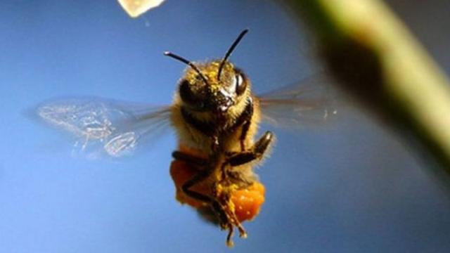 Saving Bees: un progetto che nasce dalla passione alla tutela per le api