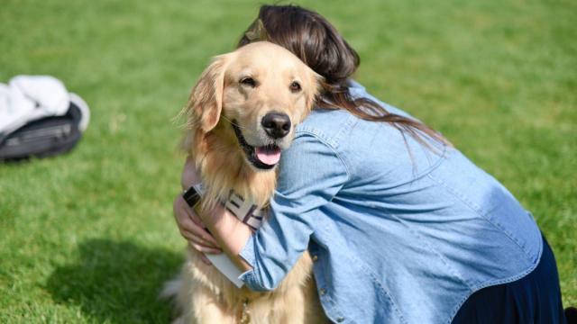 Milionário americano investe R$ 25 milhões em marketing por ter salvo seu cachorro
