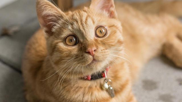 En Turquie, un chat errant rentre dans une classe et change le quotidien des élèves