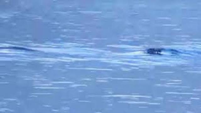 Un testigo confirma que 'Nahuelito' sigue en el lago Nahuel Huapi
