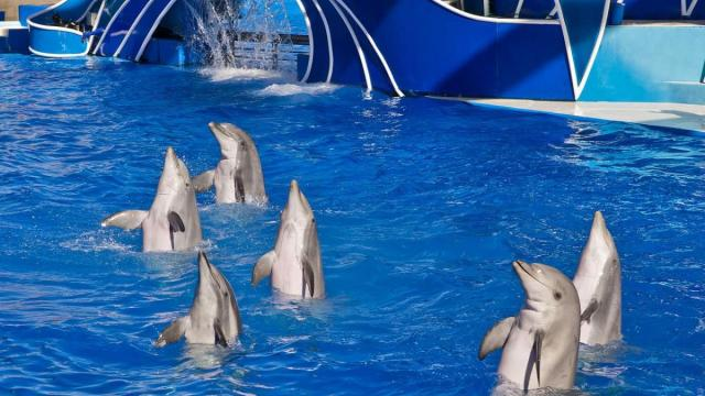 Trainers will no longer ride dolphins at SeaWorld theme parks