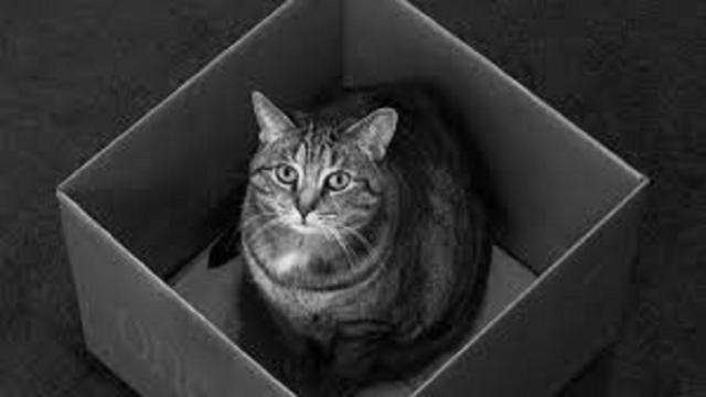 Les raisons pour lesquelles les chats aiment les boîtes en carton