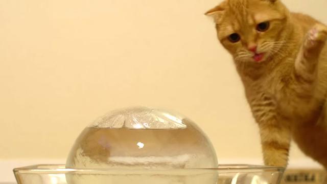 Si le chat met sa patte dans l'eau avant de boire, ce n'est pas seulement pour s'amuser
