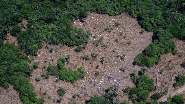 Área de conservação ambiental pode reduzir até 50% com desmatamento na Amazônia