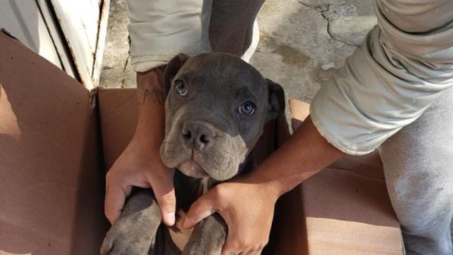 Un niño mexicano deja a su perro en un refugio con una conmovedora historia