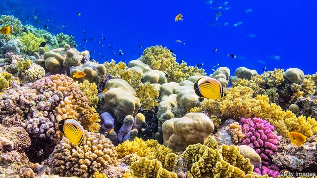 Coral reefs would cease to exist by 2100, according to researchers