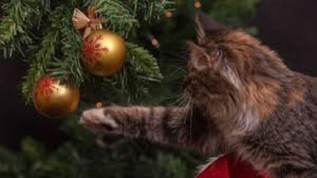 Le chat ne fait pas tomber des objets par plaisir