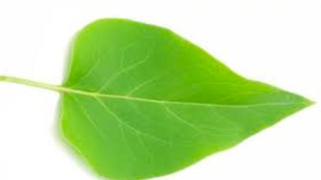Ecosia, il motore di ricerca che aiuta l'ambiente: 45 click per salvare un albero