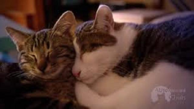 5 positions que votre chat prend en dormant et leurs explications