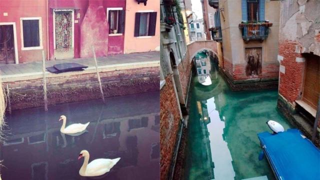 La fauna regresa a los canales de Venecia gracias a la cuarentena por el coronavirus