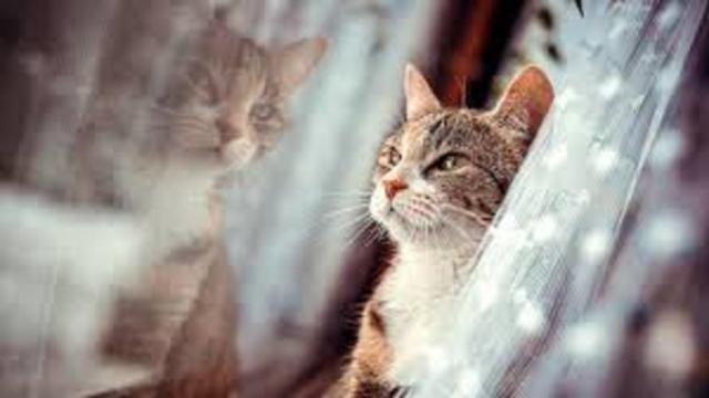 Le chat passerait 5 heures par jour devant la fenêtre