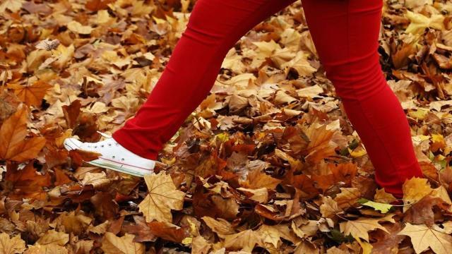 Com um doodle em sua página inicial, Google celebra o equinócio de outono
