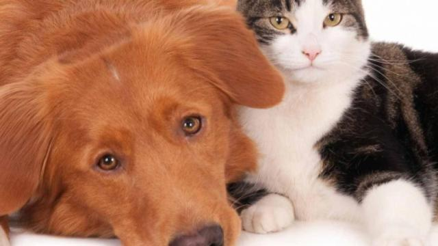 Pomeriggio 5: Il dott Zibellini allarma i veterinari per i consigli sul lavaggio dei cani
