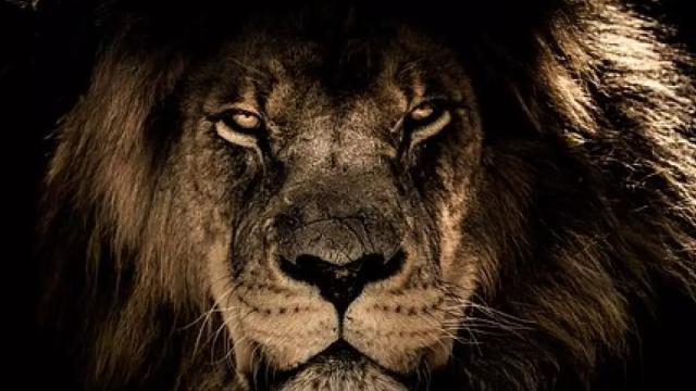 As previsões para o signo de leão em abril