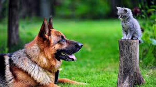 Chien et chat : comment les faire cohabiter