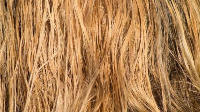 Moda capelli, acconciature per la primavera: di tendenza la coda di cavallo e la treccia