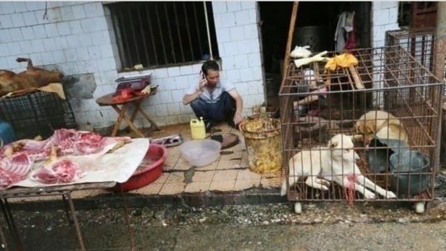 Se teme el retorno en China del mercado de animales vivos pese a la prohibición
