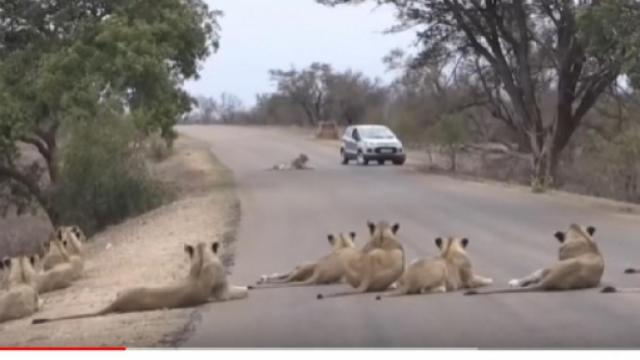 Animals in Kruger national park in South Africa enjoy their freedom from humans
