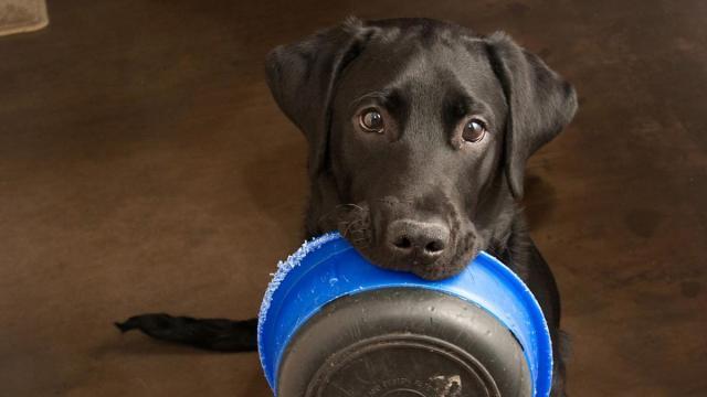 Covid-19: cães e gatos de moradores de rua em BH são ajudados em meio à quarentena