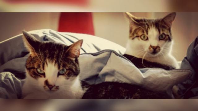 Coronavirus : Deux chats testés positifs aux Etats-Unis