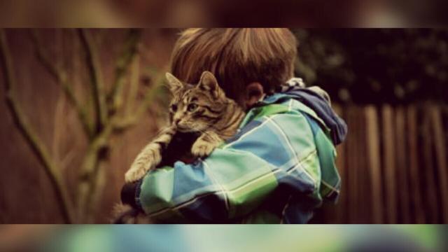 Un chat pourrait donner plus de responsabilités à votre enfant