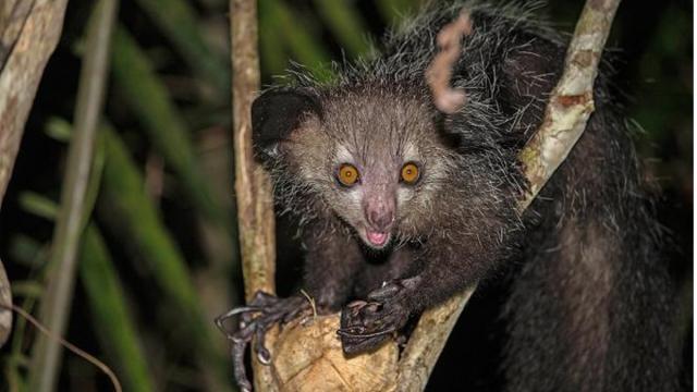 Seis animais praticamente desconhecidos pelo homem